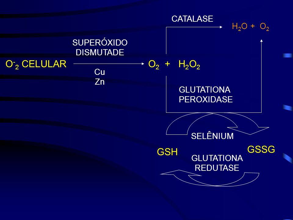 O - 2 CELULAR SUPERÓXIDO DISMUTADE Cu Zn O 2 + H 2 O 2 H 2 O + O 2 CATALASE GLUTATIONA PEROXIDASE SELÊNIUM GLUTATIONA REDUTASE GSH GSSG
