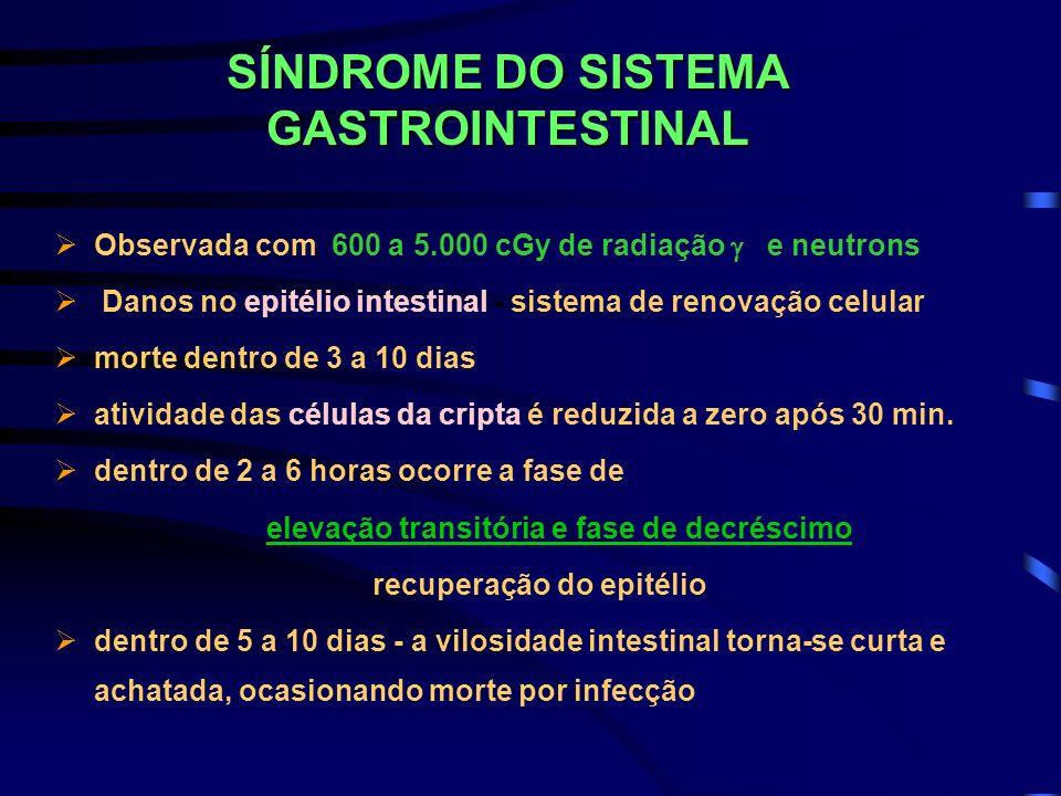 SÍNDROME DO SISTEMA GASTROINTESTINAL Observada com 600 a 5.000 cGy de radiação e neutrons Danos no epitélio intestinal - sistema de renovação celular
