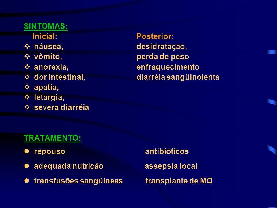 SINTOMAS: Inicial: Posterior: vnáusea, desidratação, vvômito, perda de peso vanorexia, enfraquecimento vdor intestinal, diarréia sangüinolenta vapatia