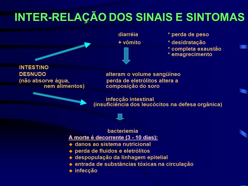 INTER-RELAÇÃO DOS SINAIS E SINTOMAS diarréia * perda de peso + vômito * desidratação * completa exaustão * emagrecimento INTESTINO DESNUDO alteram o v