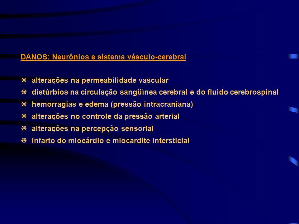 DANOS: Neurônios e sistema vásculo-cerebral alterações na permeabilidade vascular distúrbios na circulação sangüínea cerebral e do fluído cerebrospina