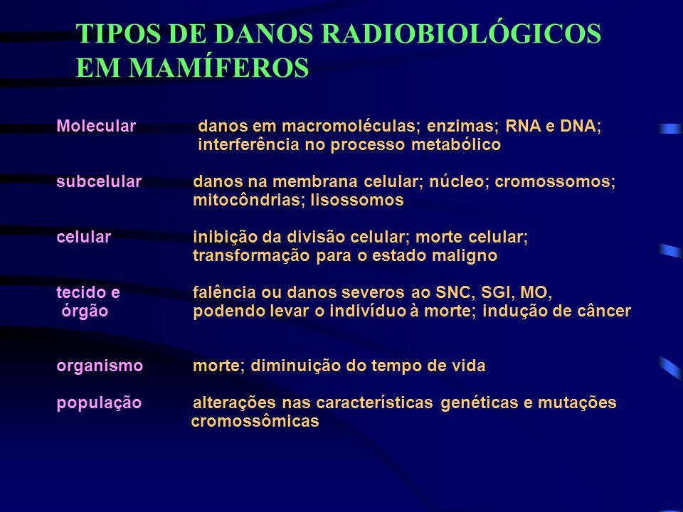 TIPOS DE DANOS RADIOBIOLÓGICOS EM MAMÍFEROS Molecular danos em macromoléculas; enzimas; RNA e DNA; interferência no processo metabólico subcelular dan