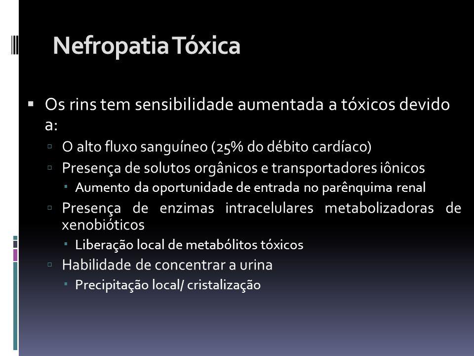 Nefropatia Tóxica Os rins tem sensibilidade aumentada a tóxicos devido a: O alto fluxo sanguíneo (25% do débito cardíaco) Presença de solutos orgânico