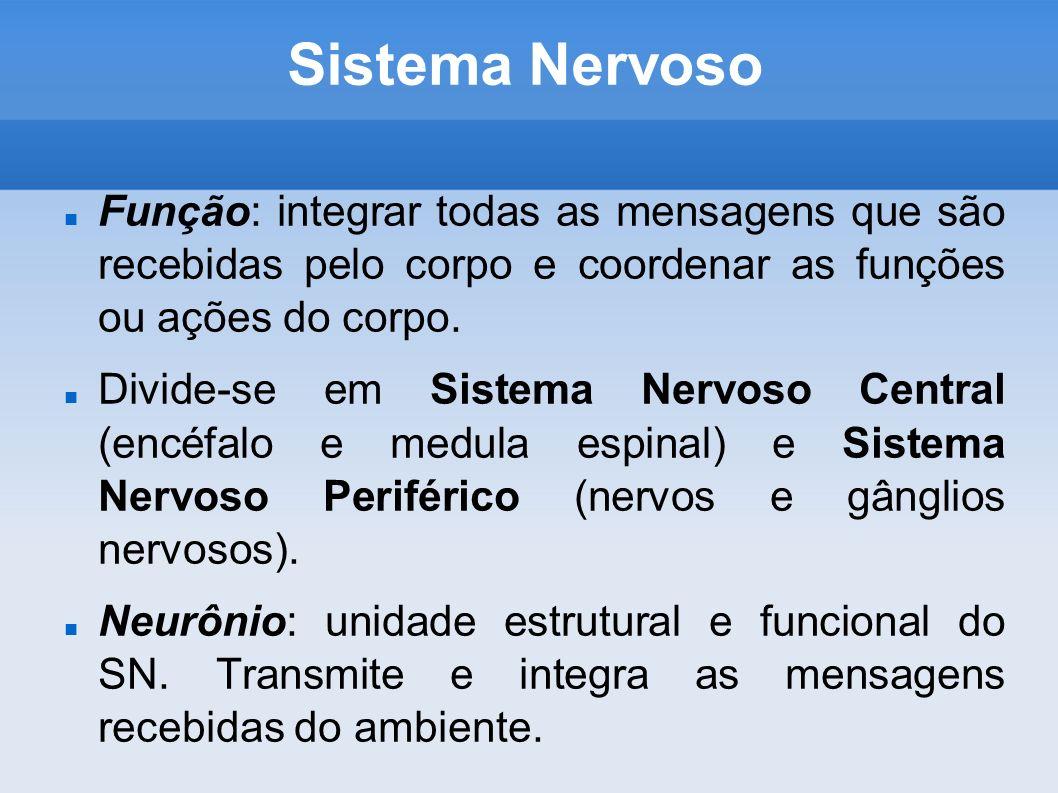 Sistema Nervoso Função: integrar todas as mensagens que são recebidas pelo corpo e coordenar as funções ou ações do corpo. Divide-se em Sistema Nervos