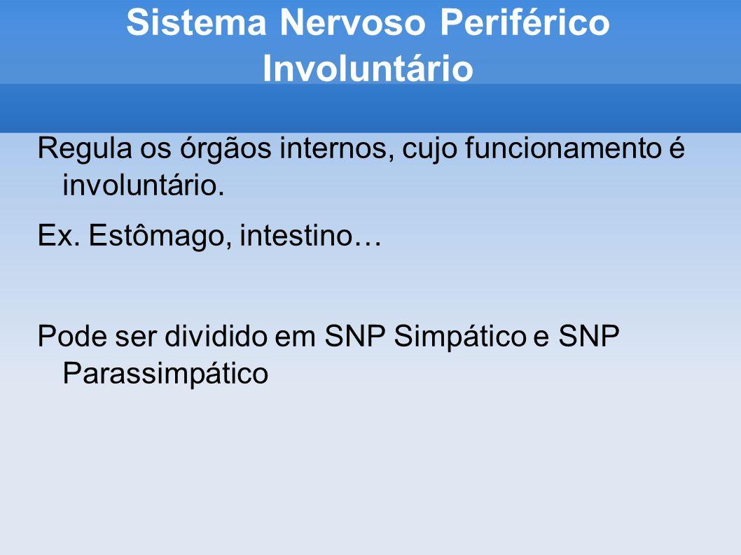 Sistema Nervoso Periférico Involuntário Regula os órgãos internos, cujo funcionamento é involuntário.