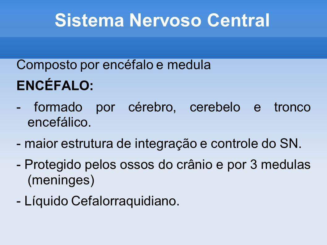 Sistema Nervoso Central Composto por encéfalo e medula ENCÉFALO: - formado por cérebro, cerebelo e tronco encefálico. - maior estrutura de integração