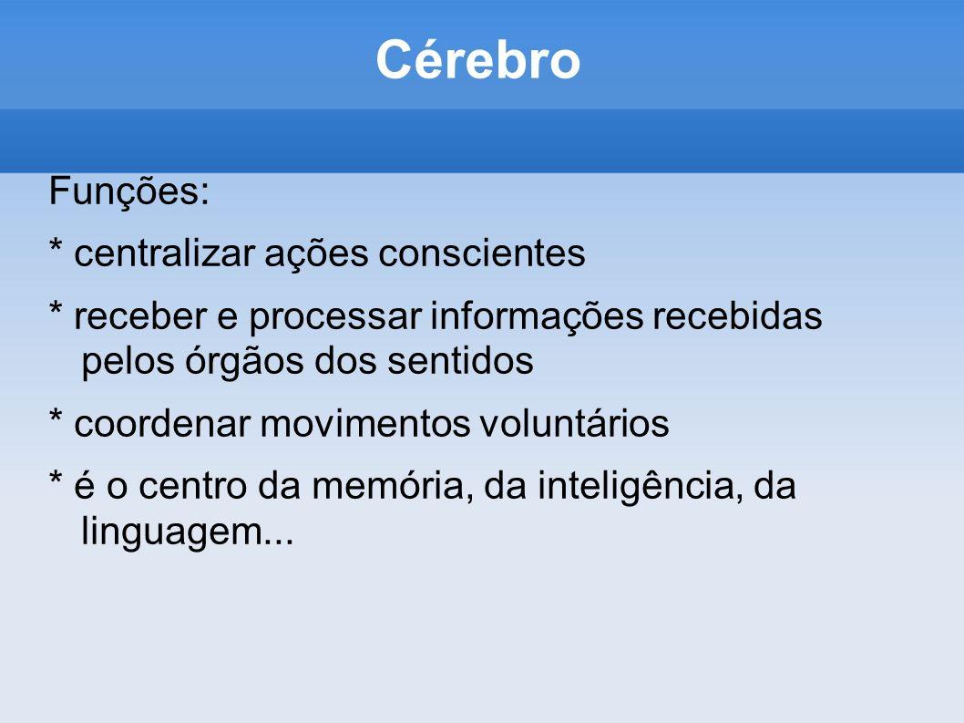 Cérebro Funções: * centralizar ações conscientes * receber e processar informações recebidas pelos órgãos dos sentidos * coordenar movimentos voluntár