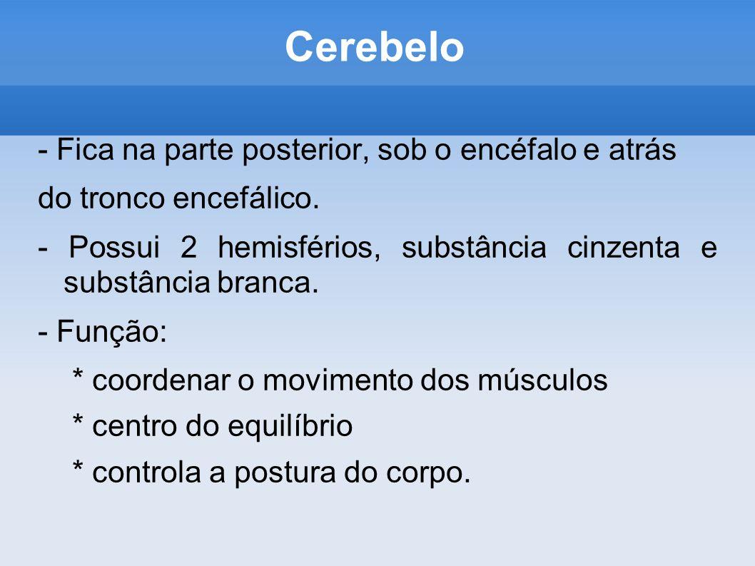Cerebelo - Fica na parte posterior, sob o encéfalo e atrás do tronco encefálico. - Possui 2 hemisférios, substância cinzenta e substância branca. - Fu