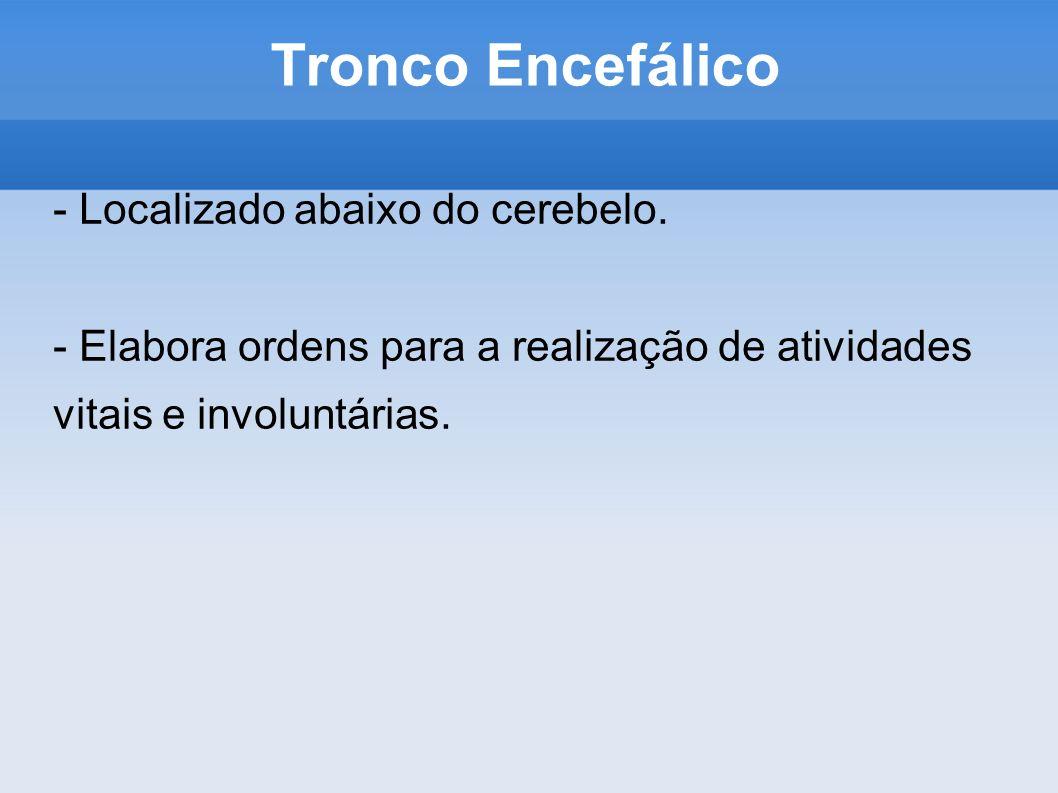 Tronco Encefálico - Localizado abaixo do cerebelo. - Elabora ordens para a realização de atividades vitais e involuntárias.