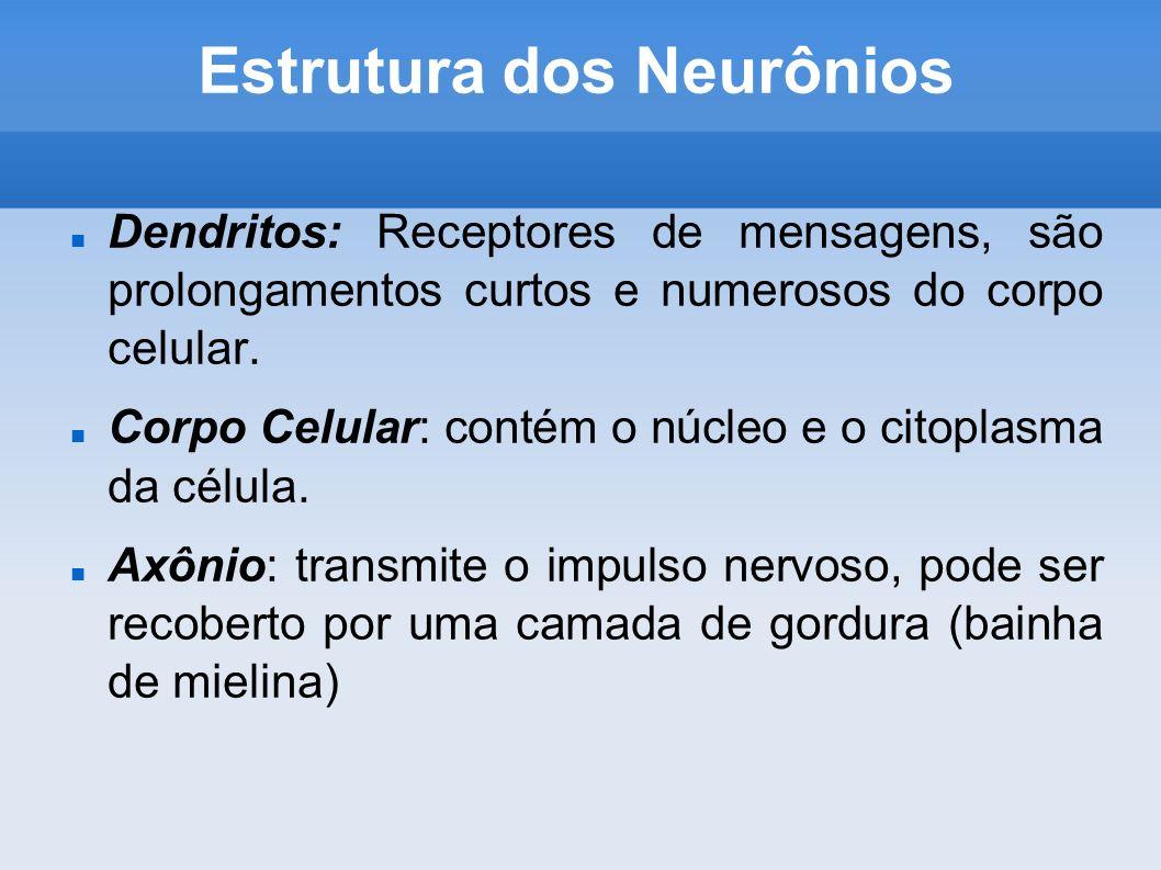 Estrutura dos Neurônios Dendritos: Receptores de mensagens, são prolongamentos curtos e numerosos do corpo celular. Corpo Celular: contém o núcleo e o