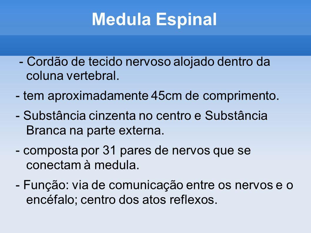 Medula Espinal - Cordão de tecido nervoso alojado dentro da coluna vertebral. - tem aproximadamente 45cm de comprimento. - Substância cinzenta no cent