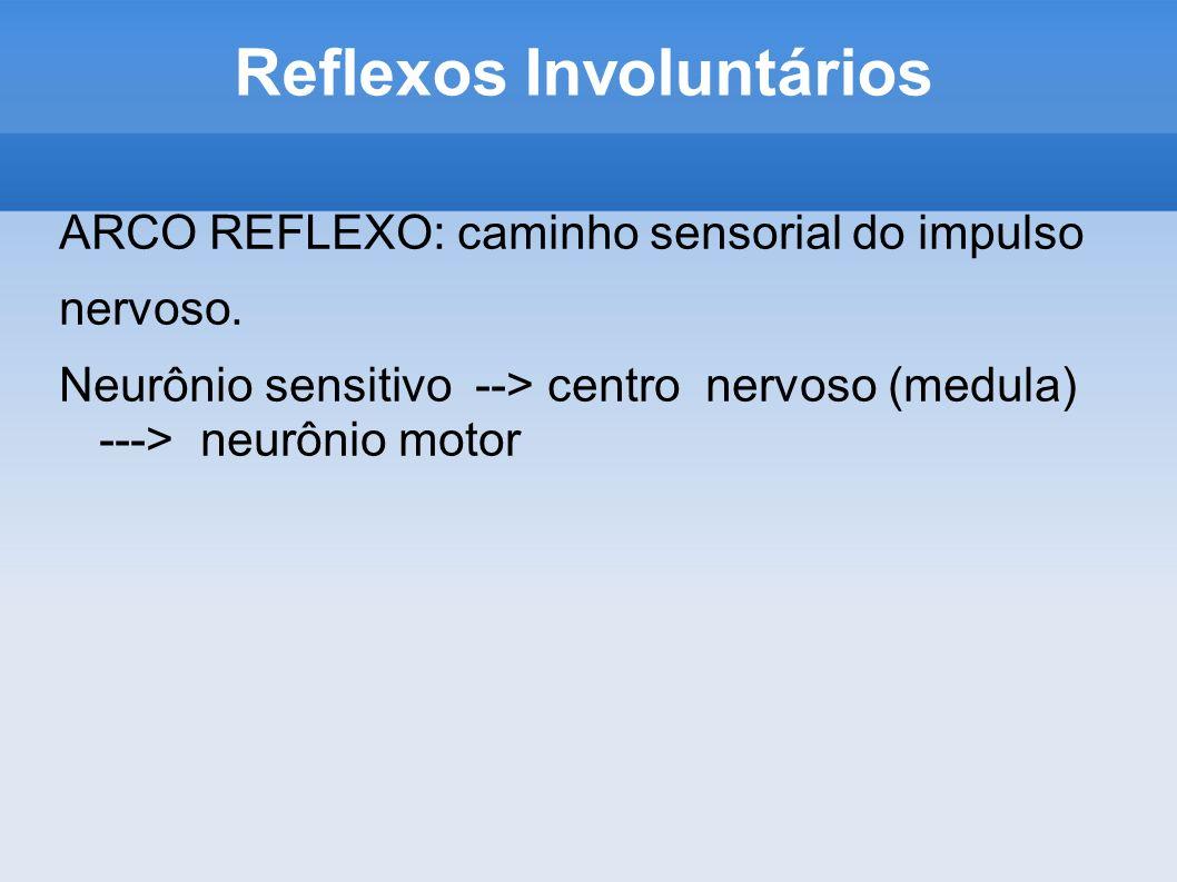 Reflexos Involuntários ARCO REFLEXO: caminho sensorial do impulso nervoso. Neurônio sensitivo --> centro nervoso (medula) ---> neurônio motor