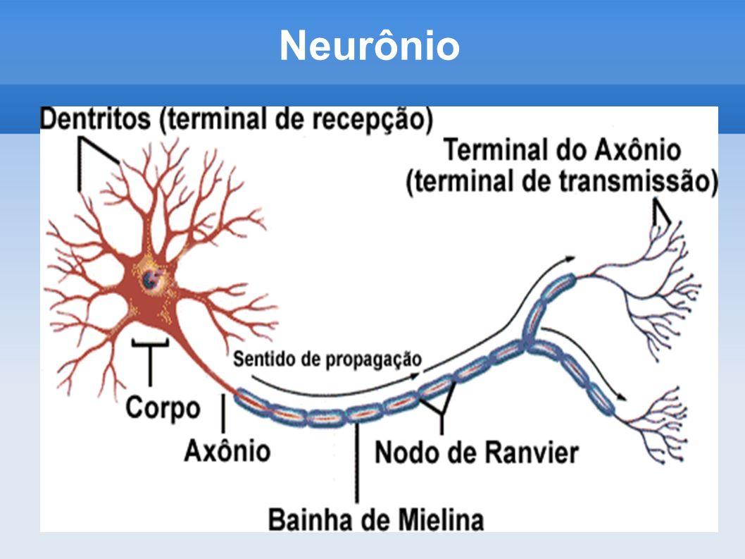Sistema Nervoso Central Composto por encéfalo e medula ENCÉFALO: - formado por cérebro, cerebelo e tronco encefálico.