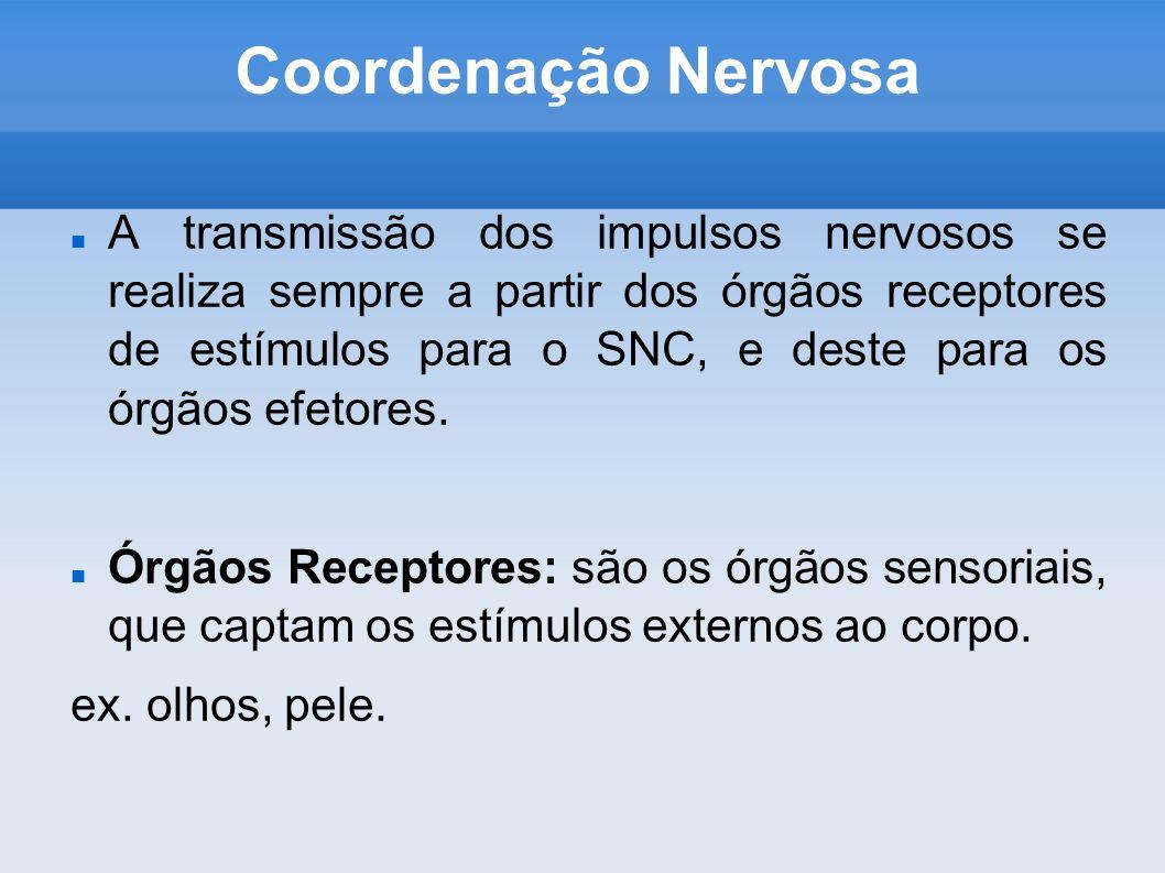 Coordenação Nervosa A transmissão dos impulsos nervosos se realiza sempre a partir dos órgãos receptores de estímulos para o SNC, e deste para os órgã