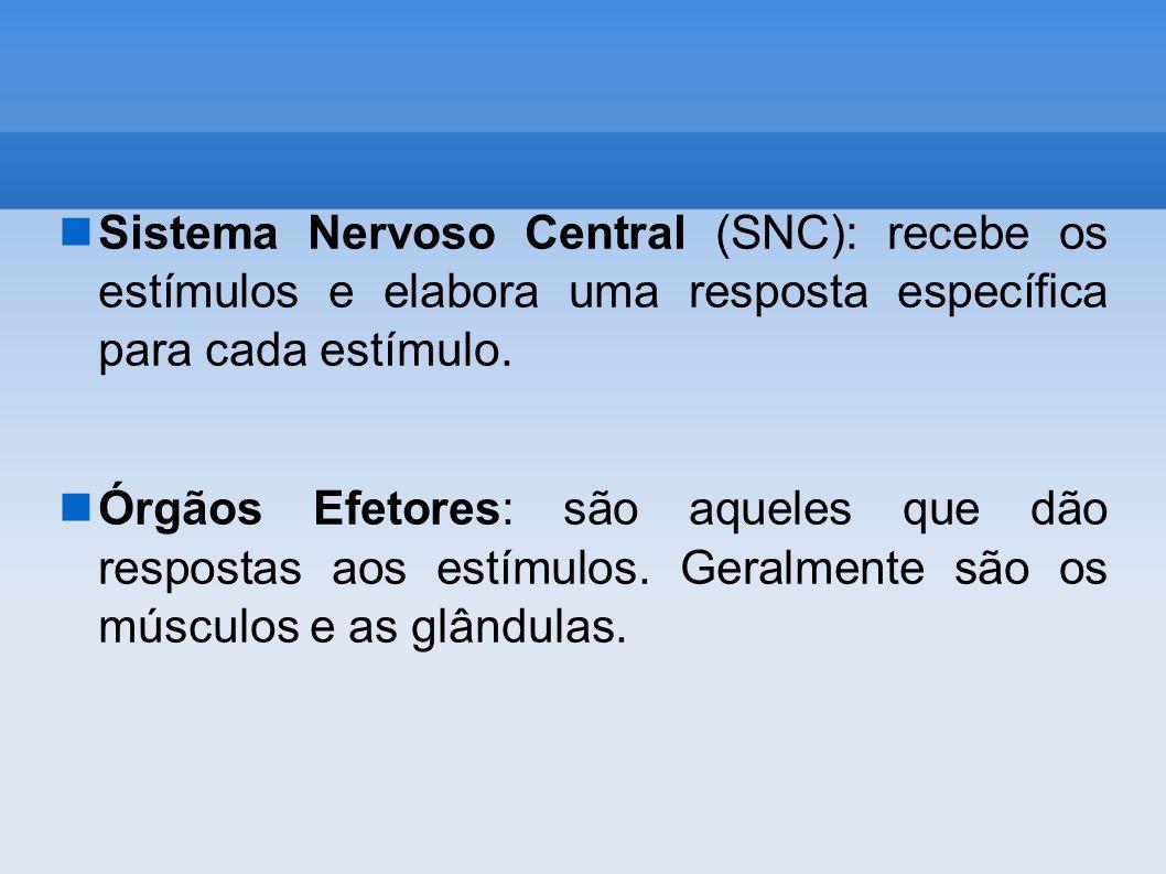 Sistema Nervoso Central (SNC): recebe os estímulos e elabora uma resposta específica para cada estímulo. Órgãos Efetores: são aqueles que dão resposta