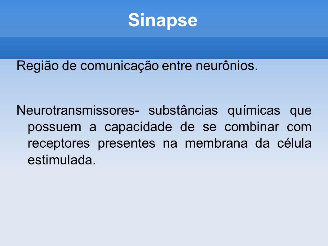 Sinapse Região de comunicação entre neurônios. Neurotransmissores- substâncias químicas que possuem a capacidade de se combinar com receptores present