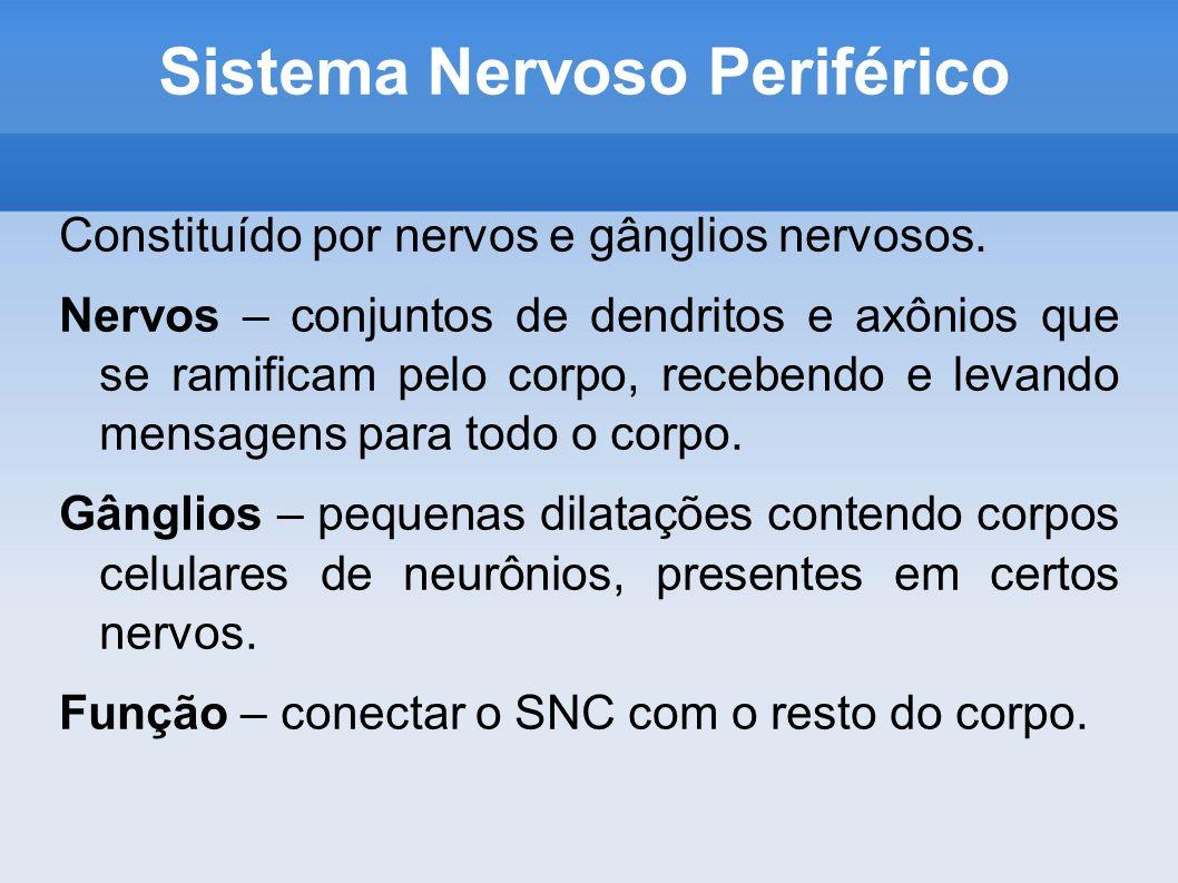 Sistema Nervoso Periférico Constituído por nervos e gânglios nervosos. Nervos – conjuntos de dendritos e axônios que se ramificam pelo corpo, recebend
