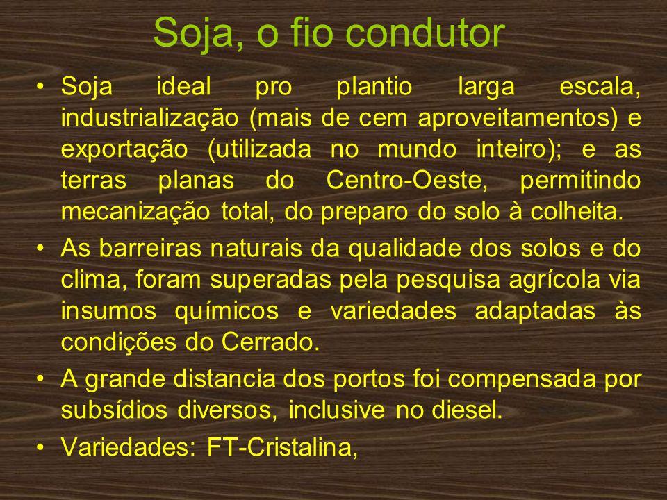 Soja, o fio condutor Soja ideal pro plantio larga escala, industrialização (mais de cem aproveitamentos) e exportação (utilizada no mundo inteiro); e