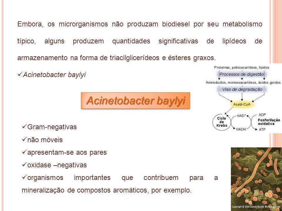 Embora, os microrganismos não produzam biodiesel por seu metabolismo típico, alguns produzem quantidades significativas de lipídeos de armazenamento n