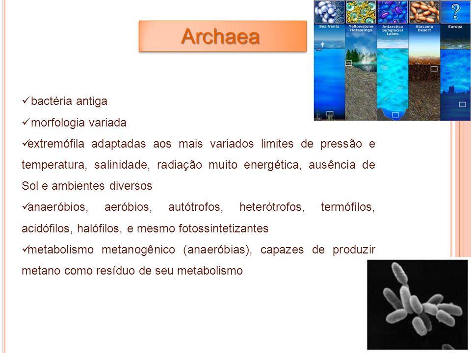 Archaea bactéria antiga morfologia variada extremófila adaptadas aos mais variados limites de pressão e temperatura, salinidade, radiação muito energé