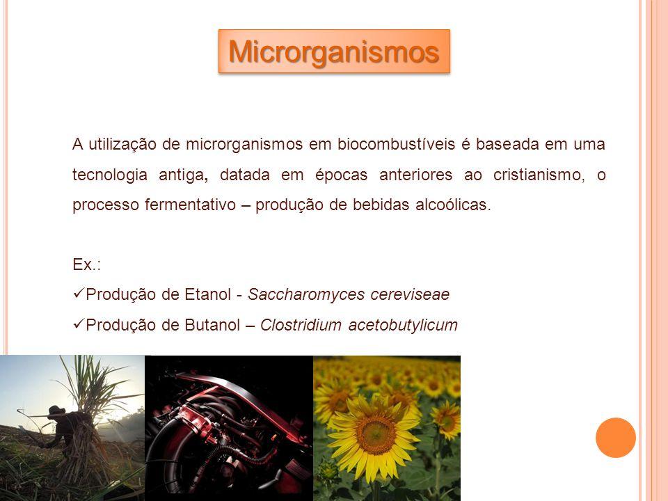 MicrorganismosMicrorganismos A utilização de microrganismos em biocombustíveis é baseada em uma tecnologia antiga, datada em épocas anteriores ao cris