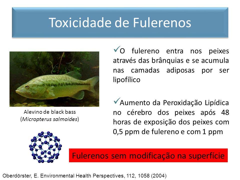 Alevino de black bass (Micropterus salmoides) Oberdörster, E. Environmental Health Perspectives, 112, 1058 (2004) Fulerenos sem modificação na superfí