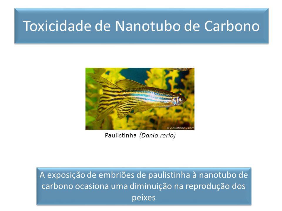Paulistinha (Danio rerio) A exposição de embriões de paulistinha à nanotubo de carbono ocasiona uma diminuição na reprodução dos peixes Toxicidade de