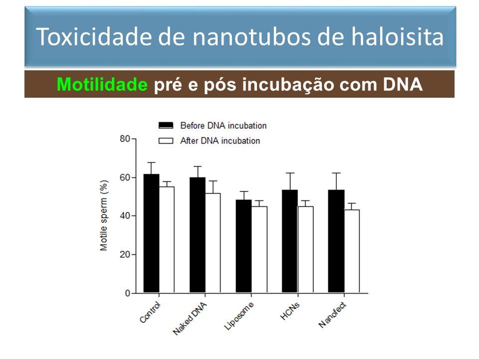 Motilidade pré e pós incubação com DNA exógeno Toxicidade de nanotubos de haloisita