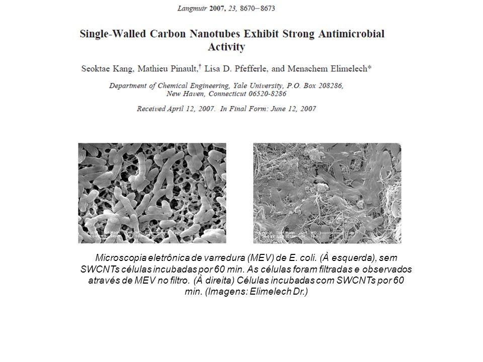 Toxicidade nanotubos Microscopia eletrônica de varredura (MEV) de E. coli. (À esquerda), sem SWCNTs células incubadas por 60 min. As células foram fil