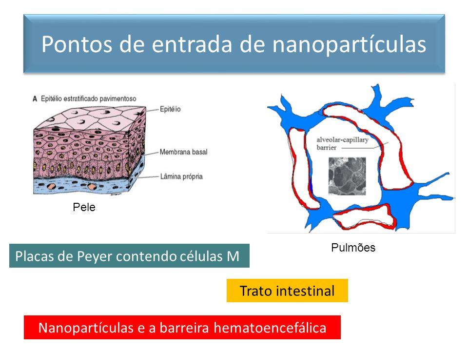 Pontos de entrada de nanopartículas Pulmões Trato intestinal Placas de Peyer contendo células M Nanopartículas e a barreira hematoencefálica Pele