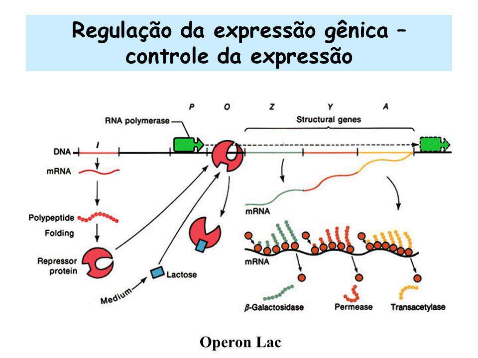 Regulação da expressão gênica – controle da expressão Operon Lac