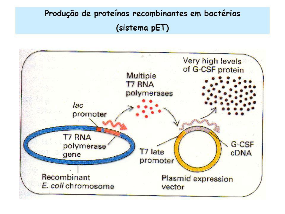 Produção de proteínas recombinantes em bactérias (sistema pET)
