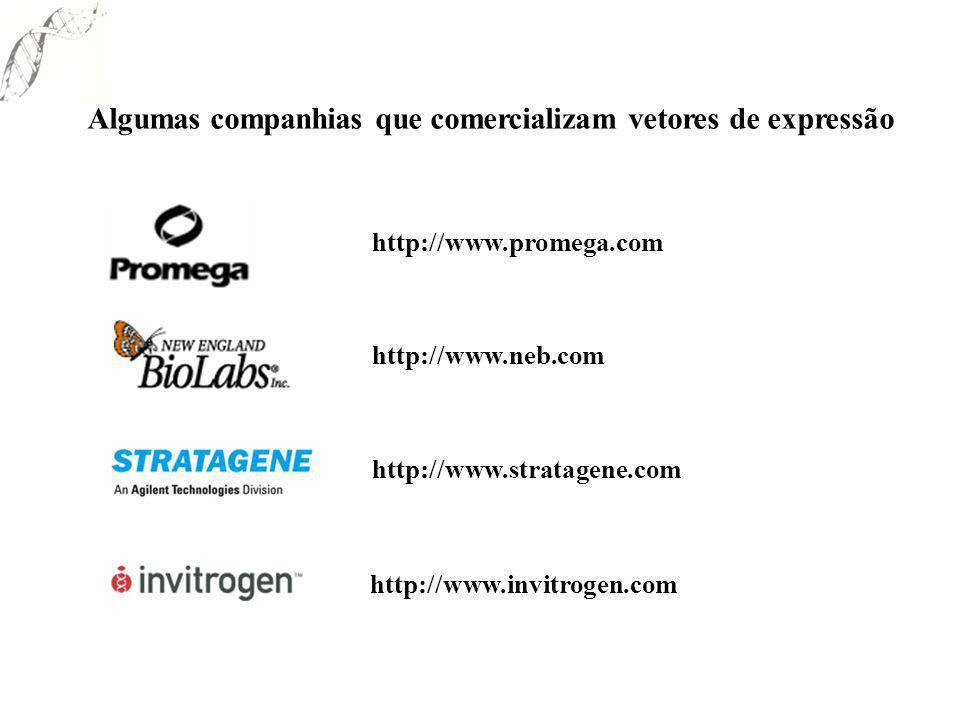 Algumas companhias que comercializam vetores de expressão http://www.promega.com http://www.neb.com http://www.stratagene.com http://www.invitrogen.co