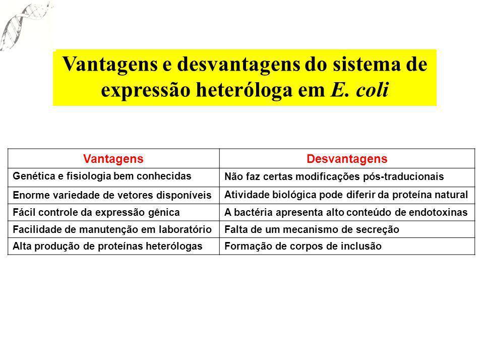 VantagensDesvantagens Genética e fisiologia bem conhecidasNão faz certas modificações pós-traducionais Enorme variedade de vetores disponíveisAtividad