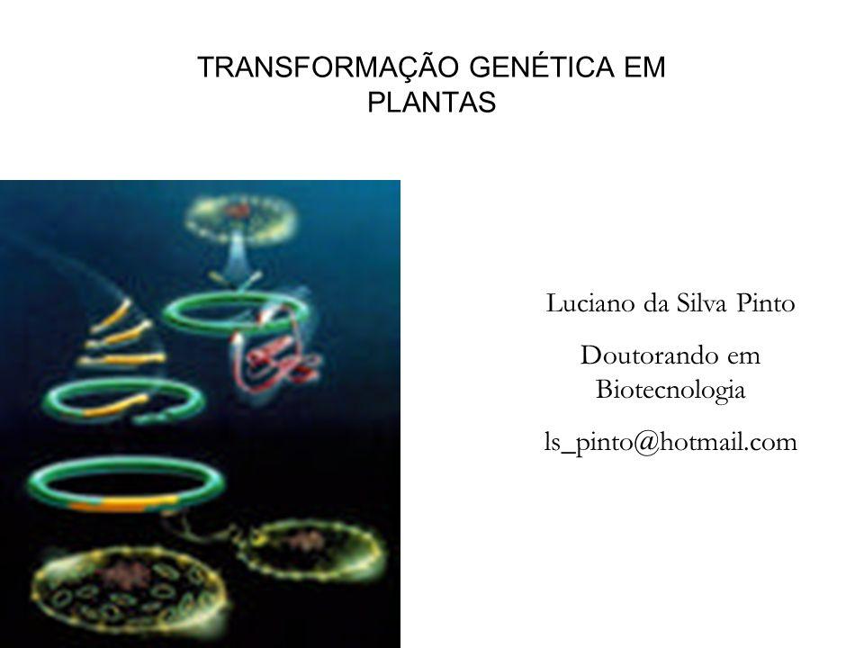 TRANSFORMAÇÃO GENÉTICA EM PLANTAS Luciano da Silva Pinto Doutorando em Biotecnologia ls_pinto@hotmail.com