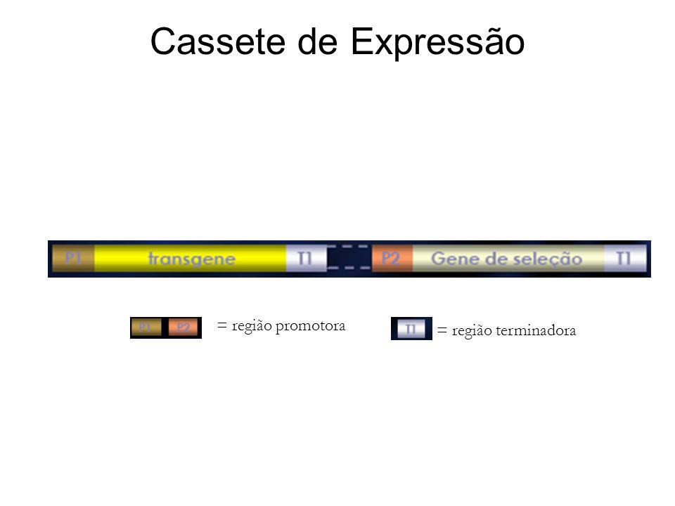 Cassete de Expressão = região promotora = região terminadora