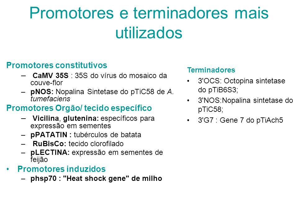 Promotores e terminadores mais utilizados Promotores constitutivos – CaMV 35S : 35S do vírus do mosaico da couve-flor –pNOS: Nopalina Sintetase do pTiC58 de A.