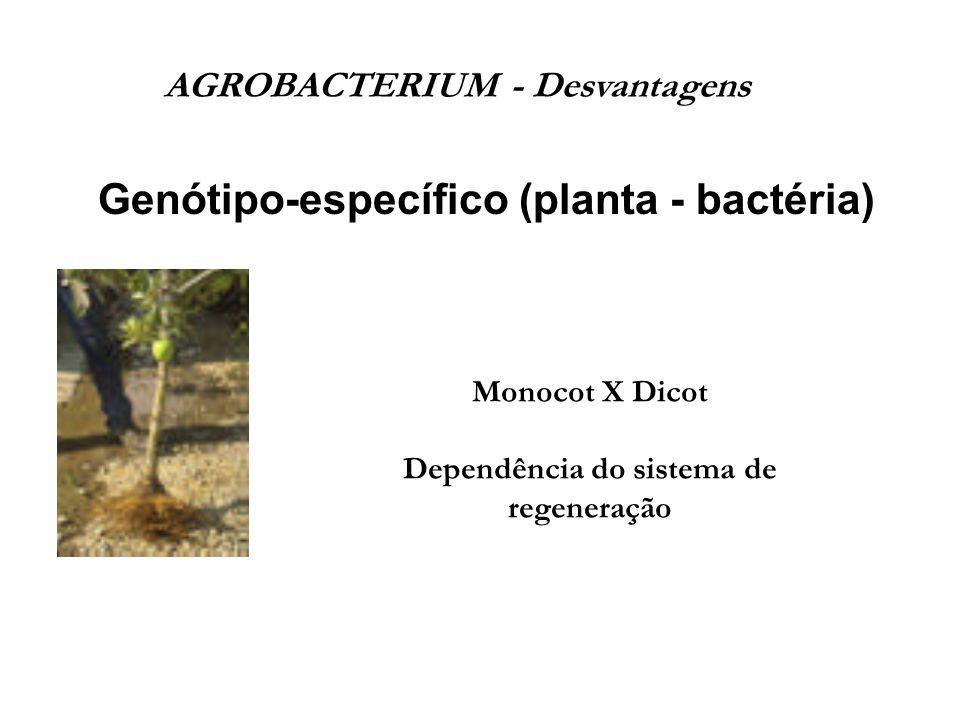 Genótipo-específico (planta - bactéria) AGROBACTERIUM - Desvantagens Monocot X Dicot Dependência do sistema de regeneração