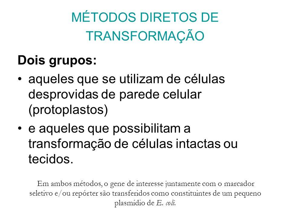 MÉTODOS DIRETOS DE TRANSFORMAÇÃO Dois grupos: aqueles que se utilizam de células desprovidas de parede celular (protoplastos) e aqueles que possibilitam a transformação de células intactas ou tecidos.