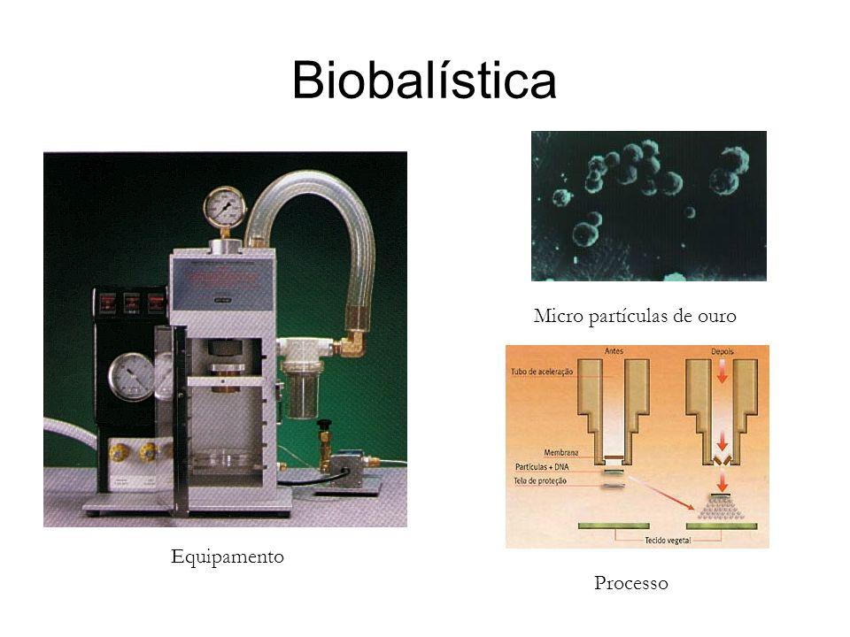Biobalística Equipamento Processo Micro partículas de ouro