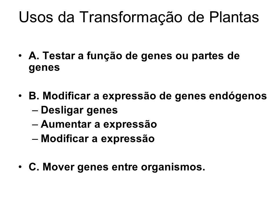 Usos da Transformação de Plantas A.Testar a função de genes ou partes de genes B.