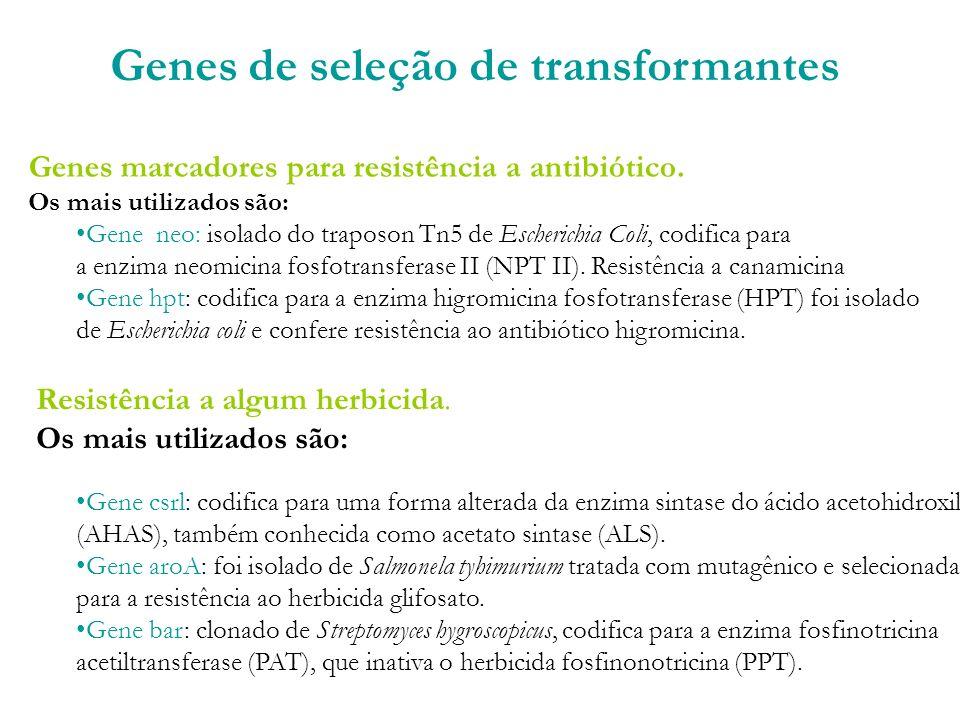 Genes de seleção de transformantes Genes marcadores para resistência a antibiótico.