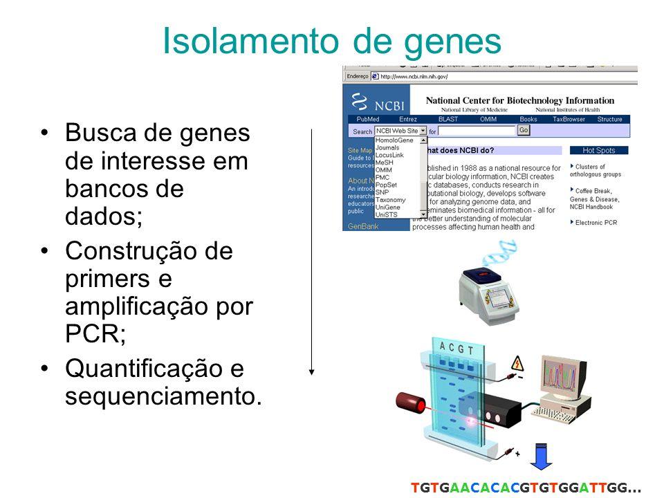 Isolamento de genes Busca de genes de interesse em bancos de dados; Construção de primers e amplificação por PCR; Quantificação e sequenciamento.
