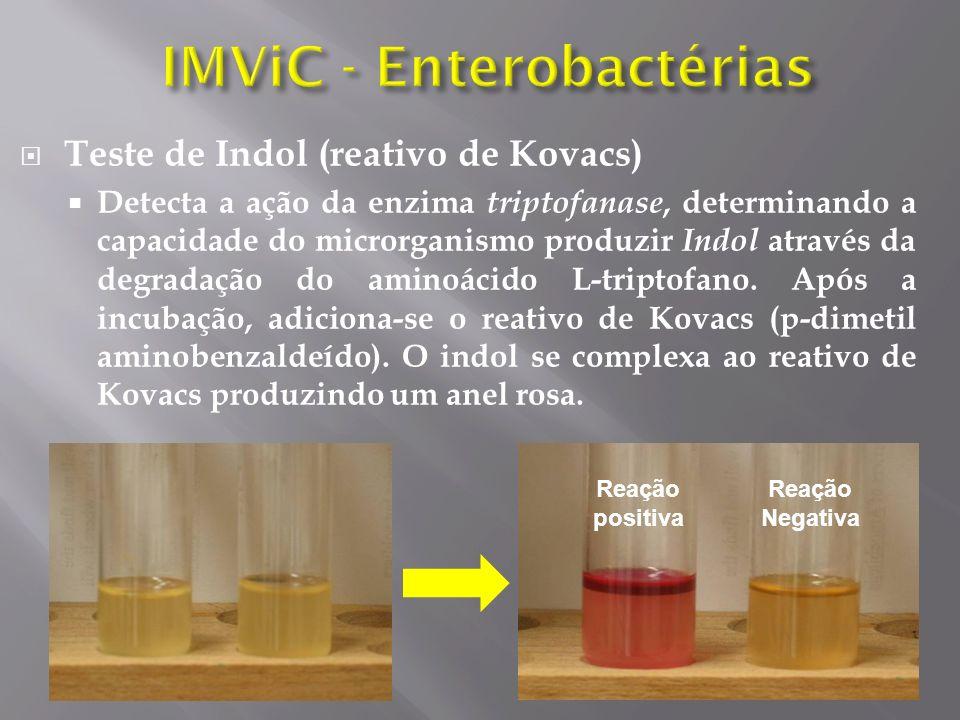 Teste de Indol (reativo de Kovacs) Detecta a ação da enzima triptofanase, determinando a capacidade do microrganismo produzir Indol através da degradação do aminoácido L-triptofano.
