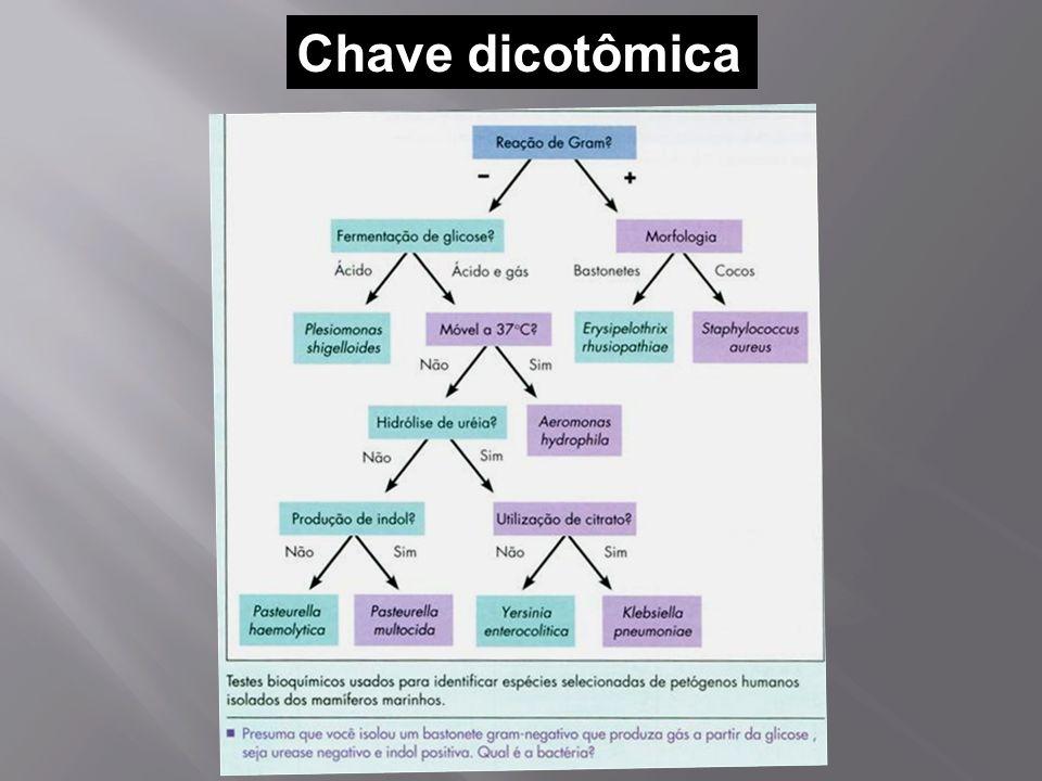 Chave dicotômica