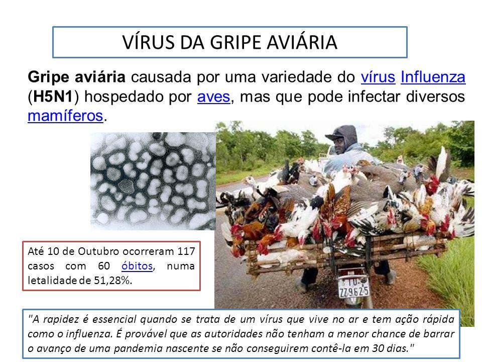 Gripe aviária causada por uma variedade do vírus Influenza (H5N1) hospedado por aves, mas que pode infectar diversos mamíferos.vírusInfluenzaaves mamí