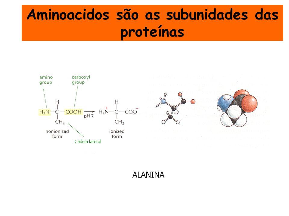 ALANINA Cadeia lateral Aminoacidos são as subunidades das proteínas