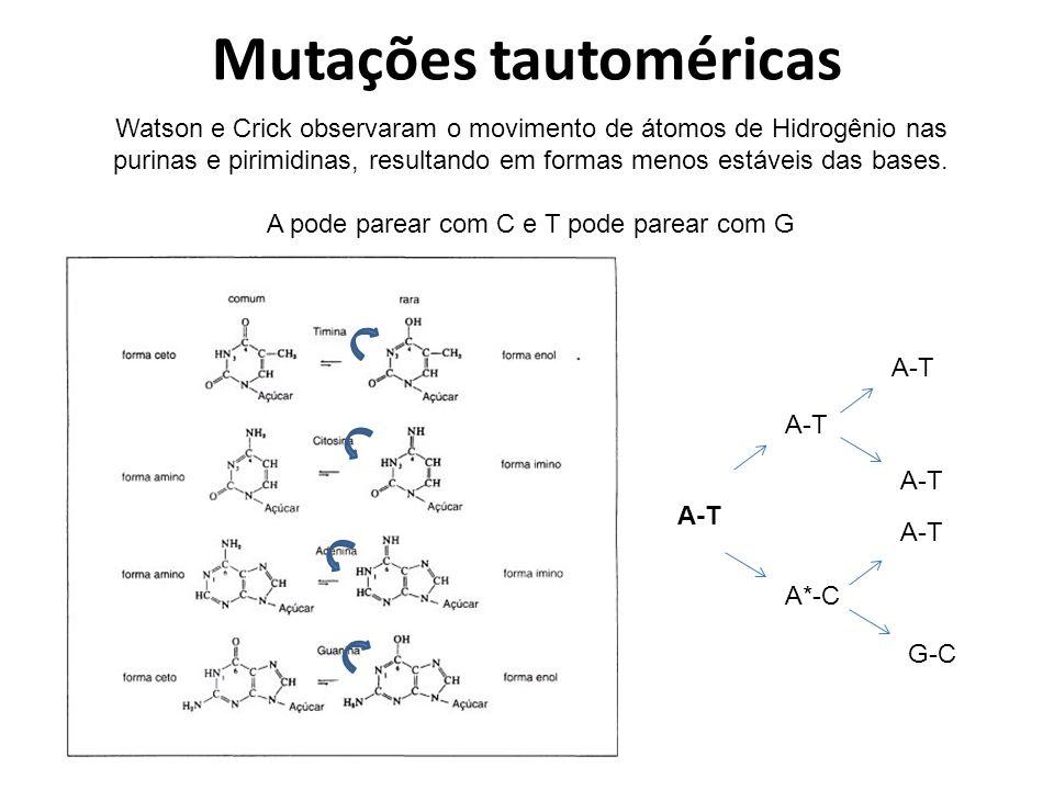 Mutações tautoméricas Watson e Crick observaram o movimento de átomos de Hidrogênio nas purinas e pirimidinas, resultando em formas menos estáveis das