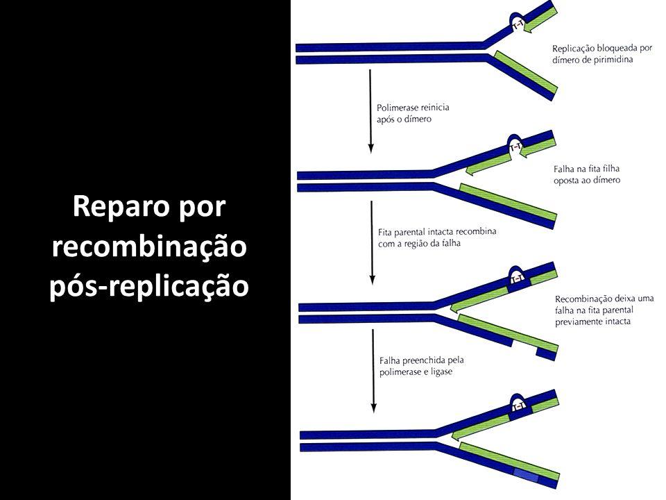 Reparo por recombinação pós-replicação
