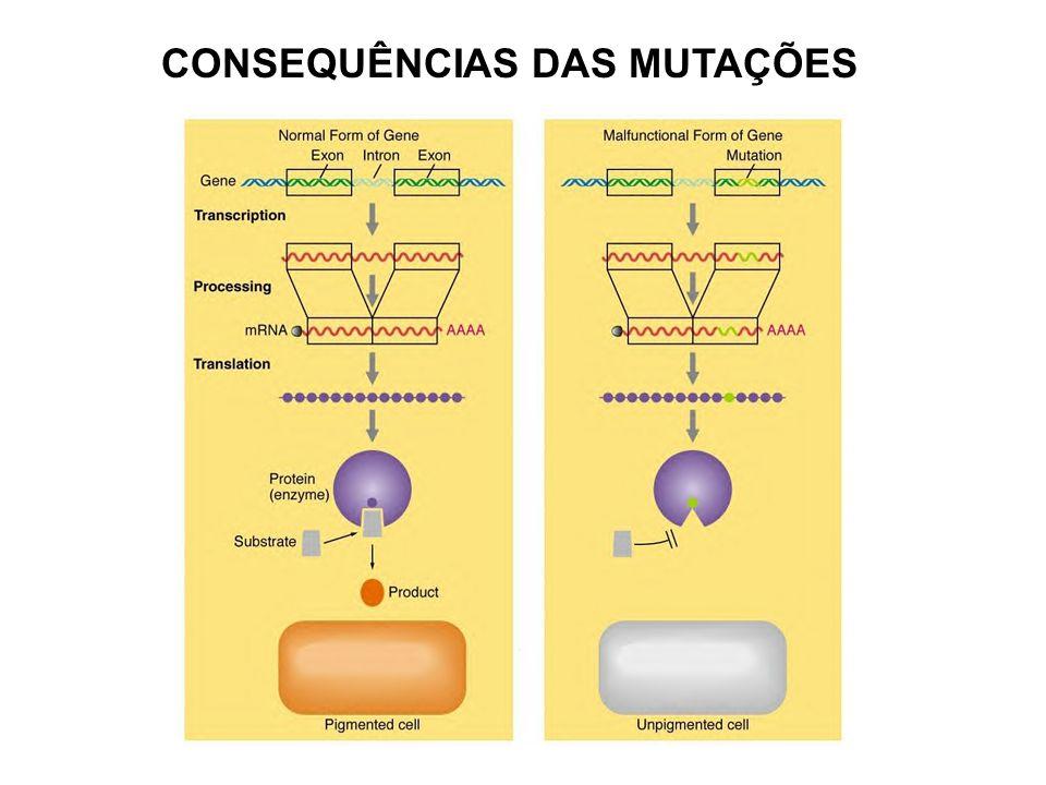 Mutantes letais condicionais análise de processos biológicos Mutações letais em um ambiente (condição restritiva) e viáveis em um segundo ambiente (condição permissiva).